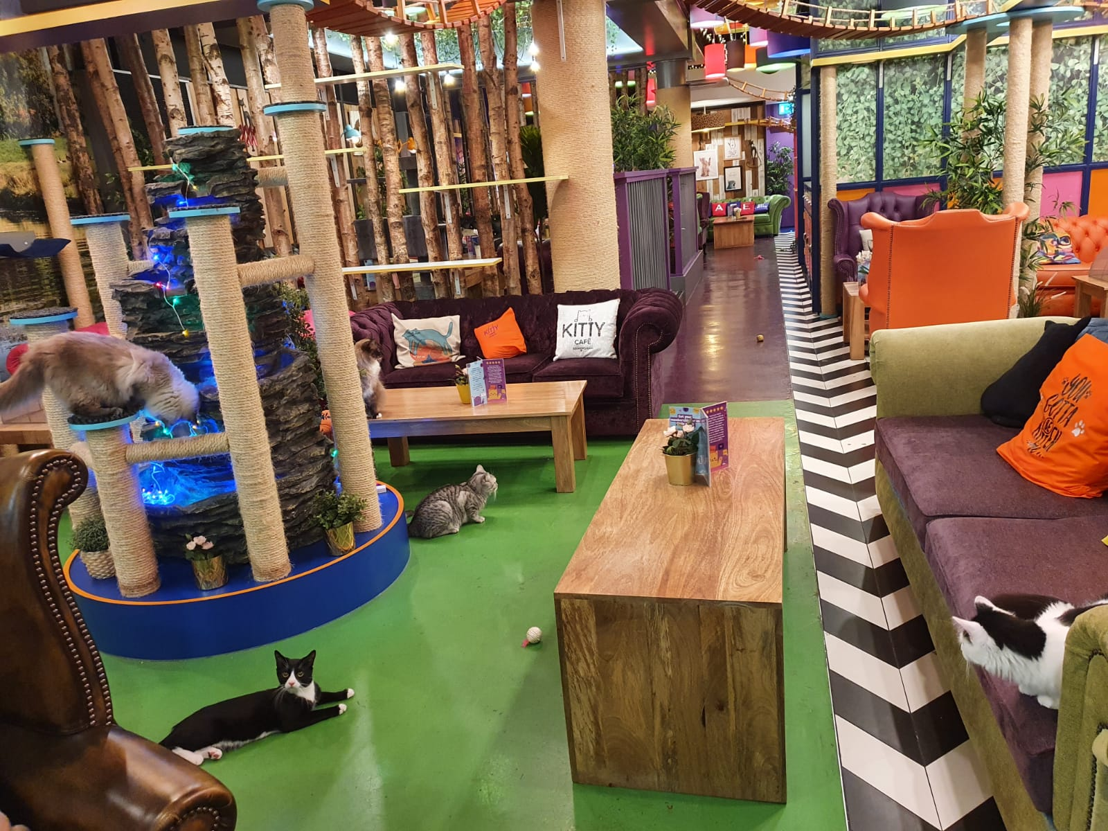 Image of Kitty Café Leeds