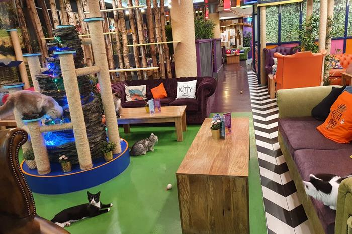 Kitty Café Leeds