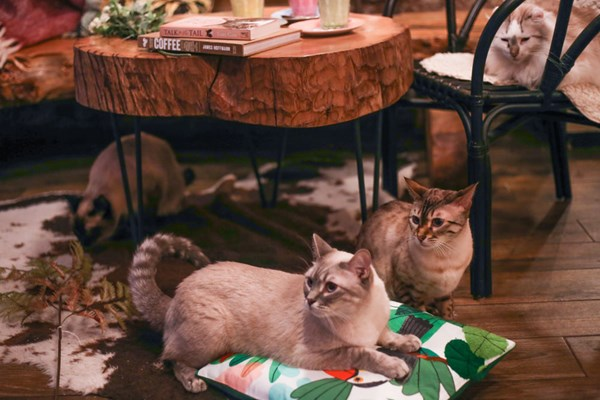 This is a Coffee Shop (with cats) - London