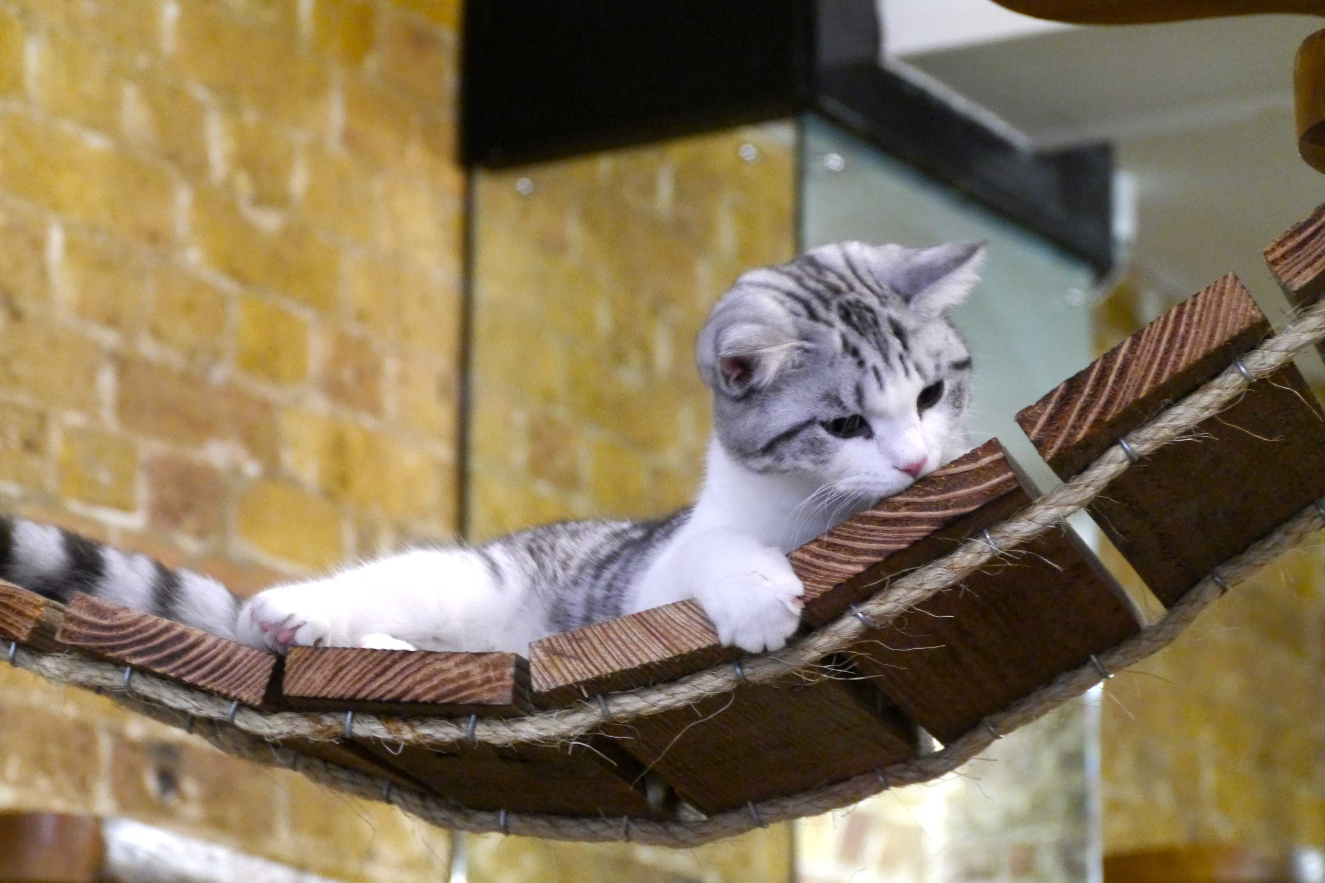 London Cat Village - London