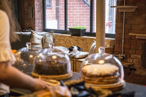Tabby Teas Cafe - Sheffield