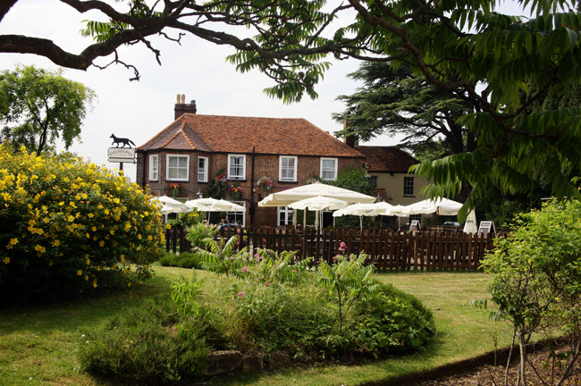 The Colney Fox - Hertfordshire