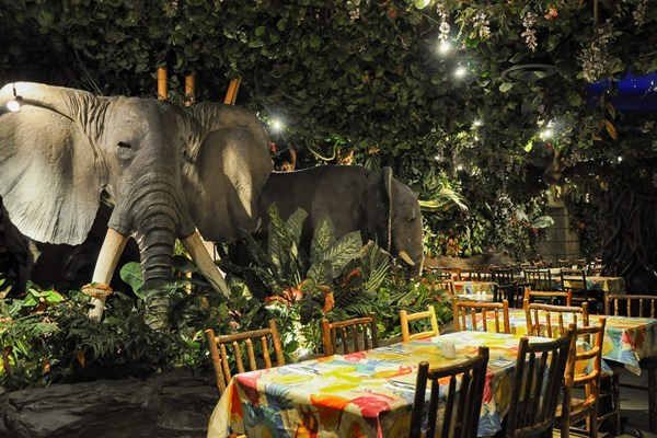 Rainforest Cafe - A Wild Place to Shop and Eat. Our menu features an array of delicious items and tropical treats, from mouthwatering appetizers and exotic salads to creative entrées such as pastas, burgers, seafood, steaks and chicken.